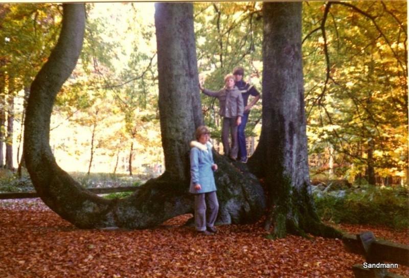 Kaiser-Wilhelm-Buche 1978... noch dreifach da.
