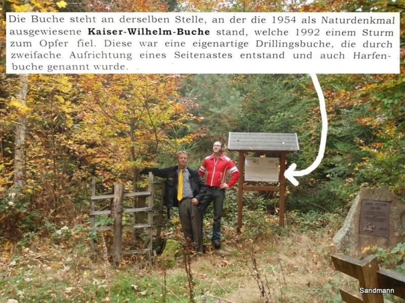 Kaiser-Wilhelm-Buche 2008... Weg. Einfach weg.