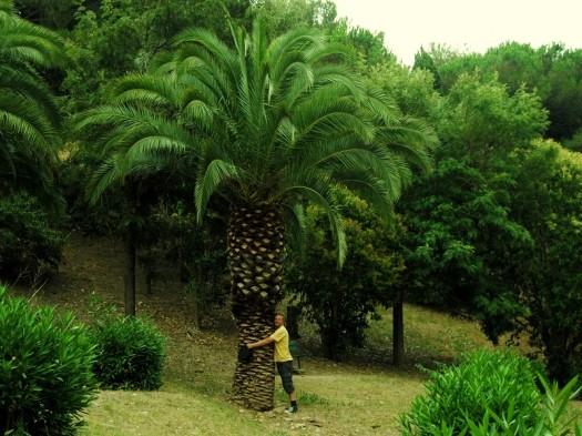 Damals meine erste Palme...