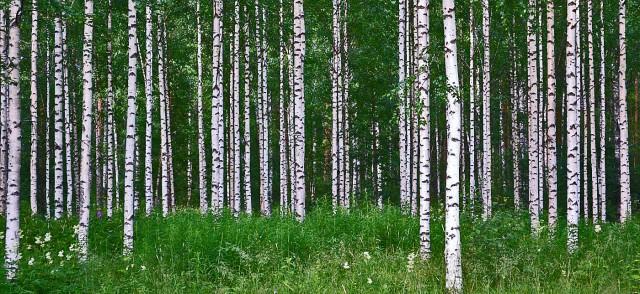 Wie man in den Wald reinruft...