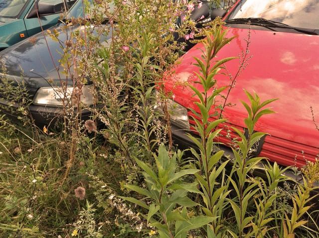Flora und Fauna gediuhen