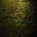 3110 Bäume 2