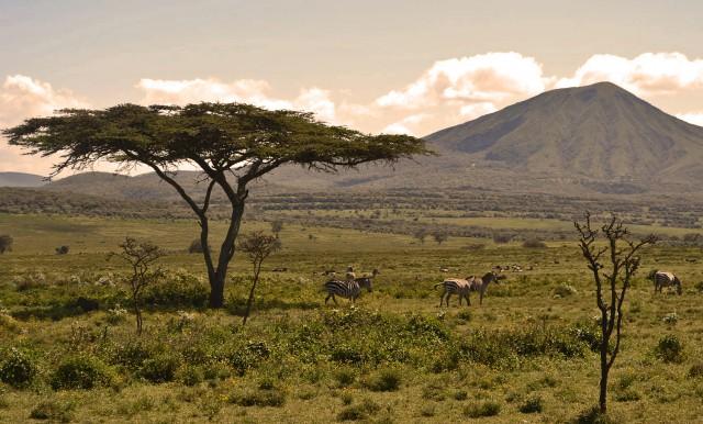 Serengeti darf nicht sterben?