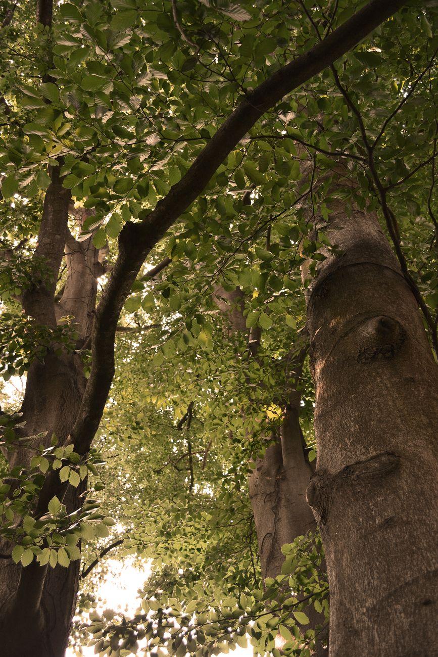 Die perfekten Bäume